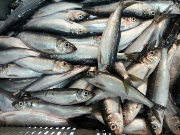 TradexLIVE - a Seafood Offers Portal for Seafood Buyers and Suppliers
